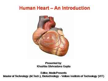 Human Heart An Introduction
