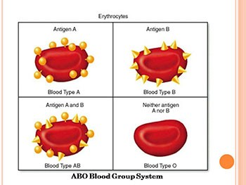 Unit 2 Forensic Serology 3 (Blood Typing)