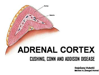 Adrenal Cortex - Cushing Conn and Addison Disease
