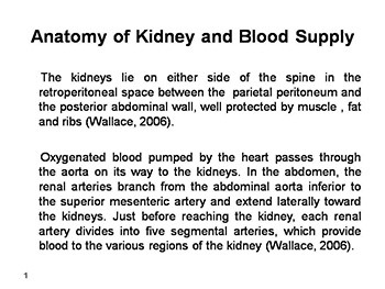 Anatomy of Kidney and Blood Supply