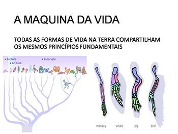 Relacao Vacinas e Cancer