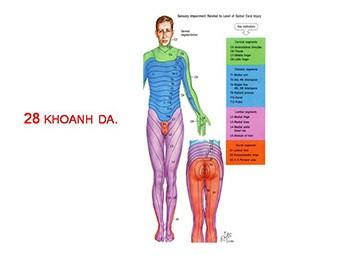 American Spinal Injury Association Asia