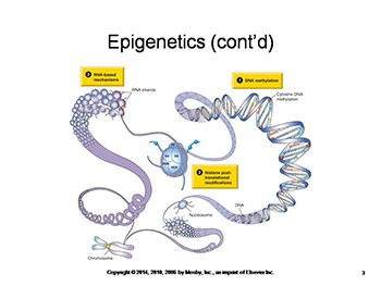 Epigenetics and Disease
