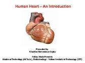 Human Heart - An Introduction