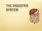 Body Digestive System