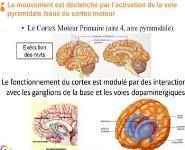 Old Age Parkinson Disease Medical Notes
