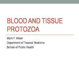 Blood And Tissue Protozoa